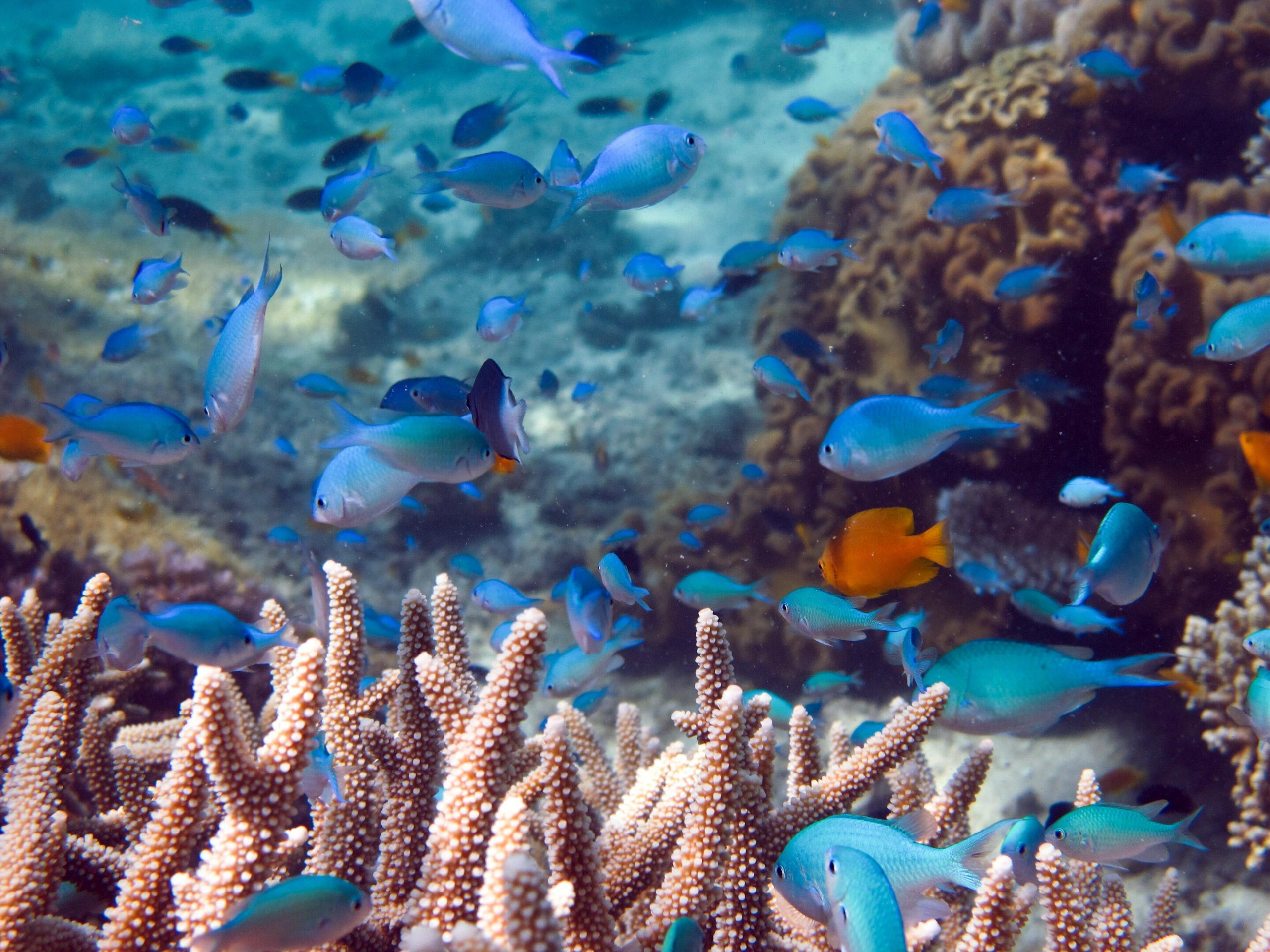 Scientists Were Wrong Coral Reef Fish Not Affected By