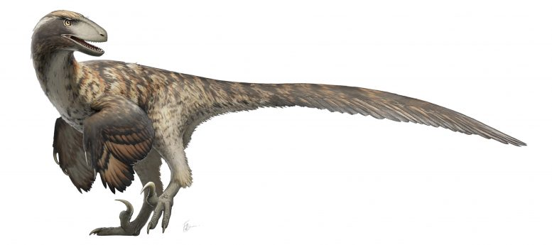 Restoration of Deinonychus