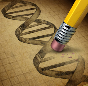 Deleting a Single Gene Reduces Fat Mass and Extends Lifespan of Mice by 20 Percent