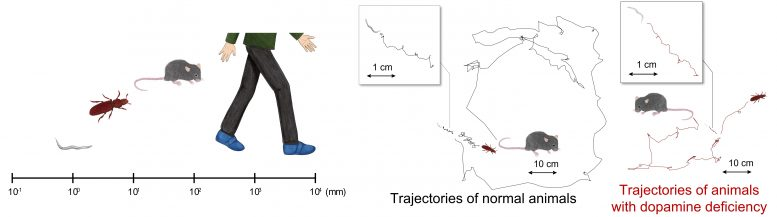 Differences in Body Scale