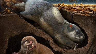 Digging Mammal Reconstruction
