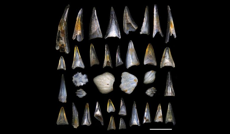 Dinosaur Extinction Drove Pulses of Fish Diversification