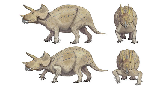 Dinosaurs Jurassic Researchers Believe Triceratops had Upright Forelimbs Dinosaur-Posture-resolved