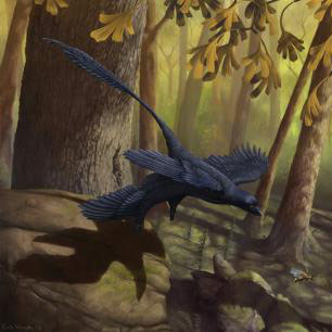 Dinosaur Wind Tunnel Test Gives New Insight into the Evolution of Bird Flight