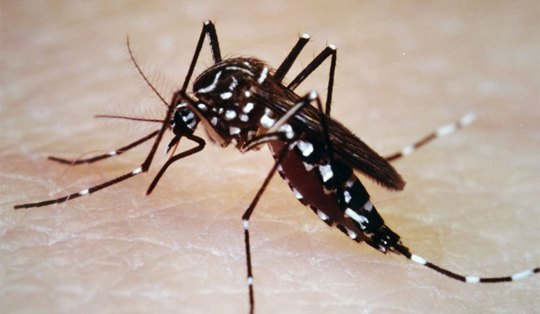 Disease-Bearing Mosquitoes Adapt to Winters