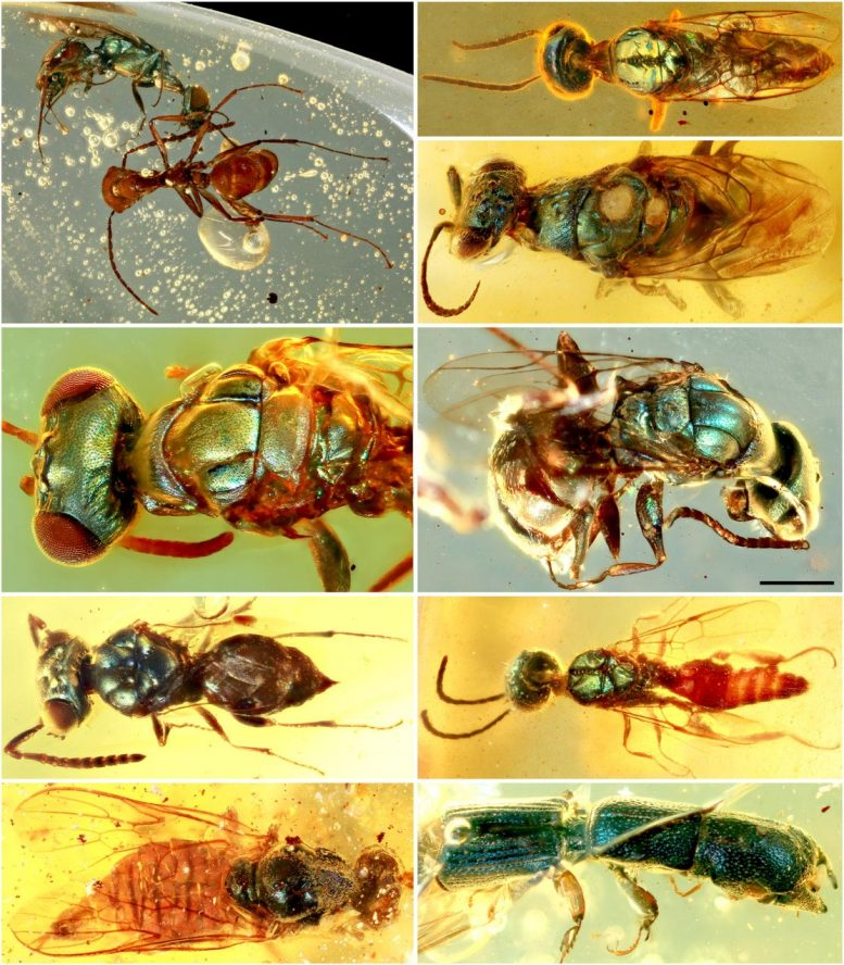 Diverse Structural-Colored Insects in Amber