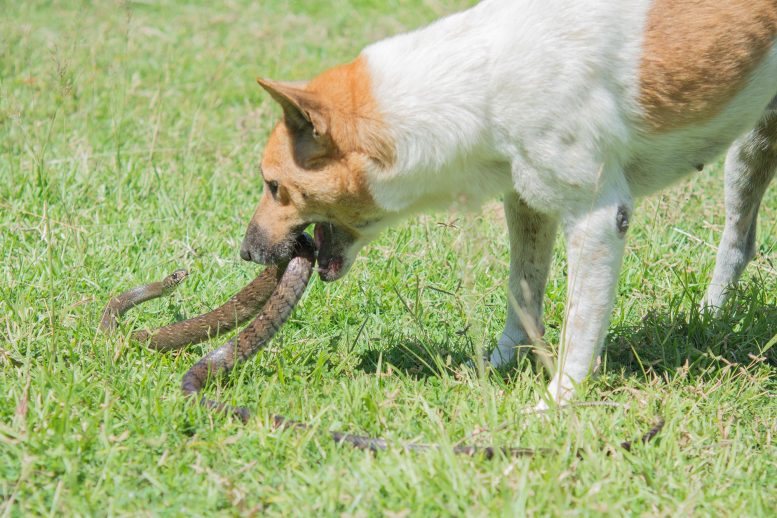 Dog Fighting Snake