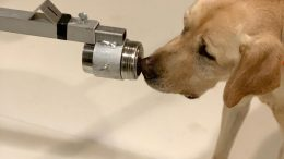 Dogs Can Sniff Out Coronavirus
