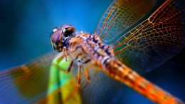 Dragonfly Close Up