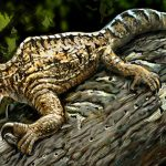 Drepanosaurus a Cross between a Chameleon and an Anteater