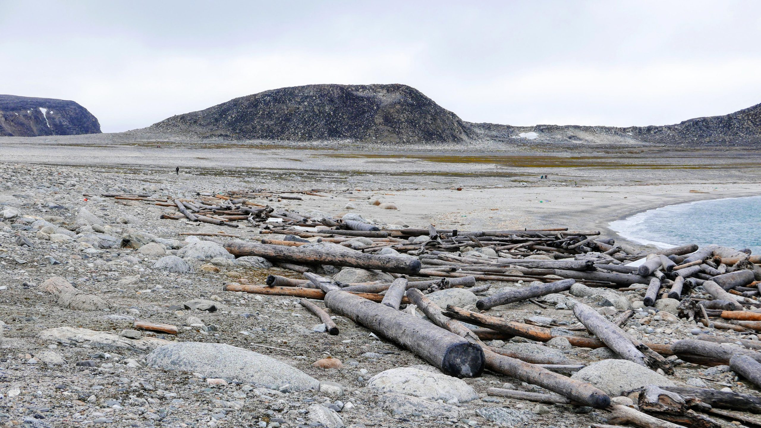 Ancient Driftwood Tracks 500 Years of Arctic Warming, Currents, and Sea Ice - SciTechDaily