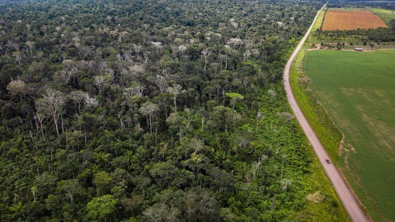Drone Image of Burned Forest