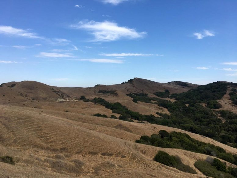 Dryland Ecosystem in Northern California