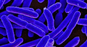 E. Coli Bacteria Could Be The Key To Efficient Carbon Capture and Recycling