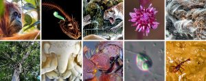 ESF Lists Top 10 New Species for 2018