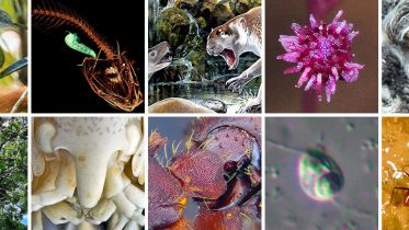 ESF Scientists List Top 10 New Species for 2018