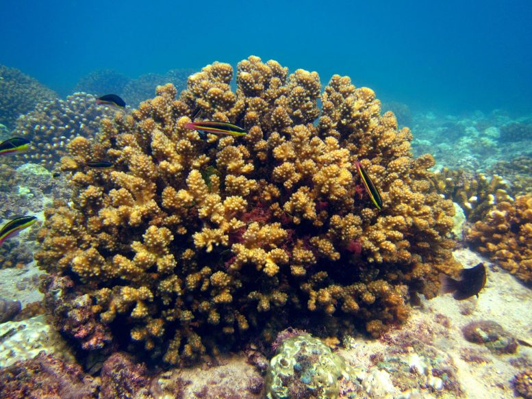Eastern Tropical Pacific Coral Reef