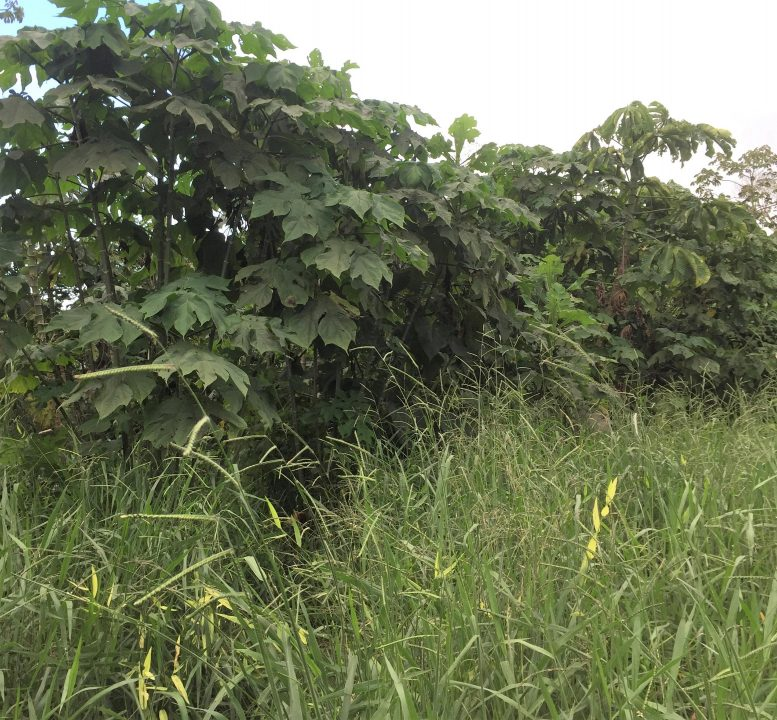 Edge Between Coffee Pulp and Control Plot
