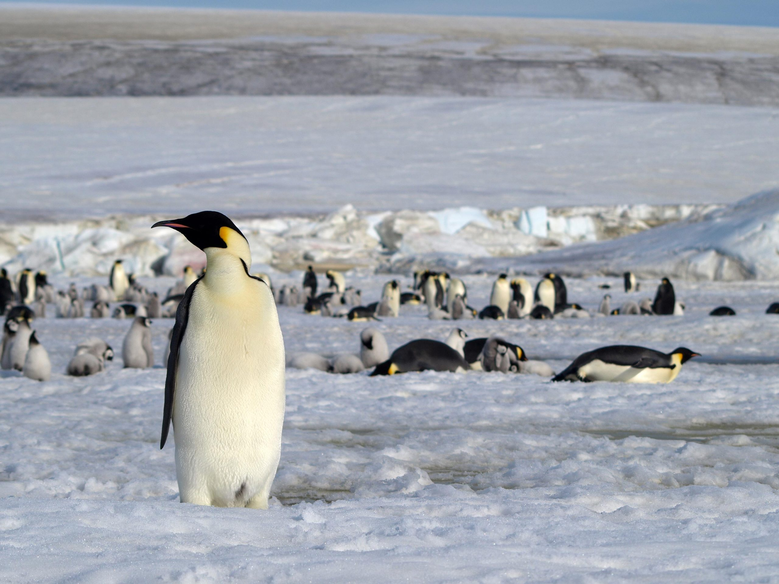 Penguin Poo Is a Clue: Discovering New Penguin Colonies From Space - SciTechDaily