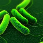 Engineered Bacteria Can Store Memories of Chemical Exposure