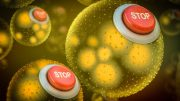 Engineered Bacteria with Kill Switches
