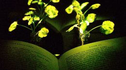Engineers Create Plants That Glow