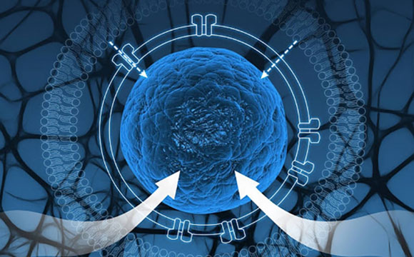 Engineers Create Synthetic Cells to Isolate Genetic Circuits