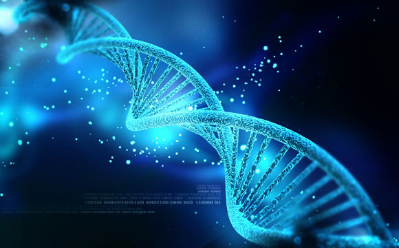 Epigenetic Algorithm Accurately Predicts Male Sexual Orientation