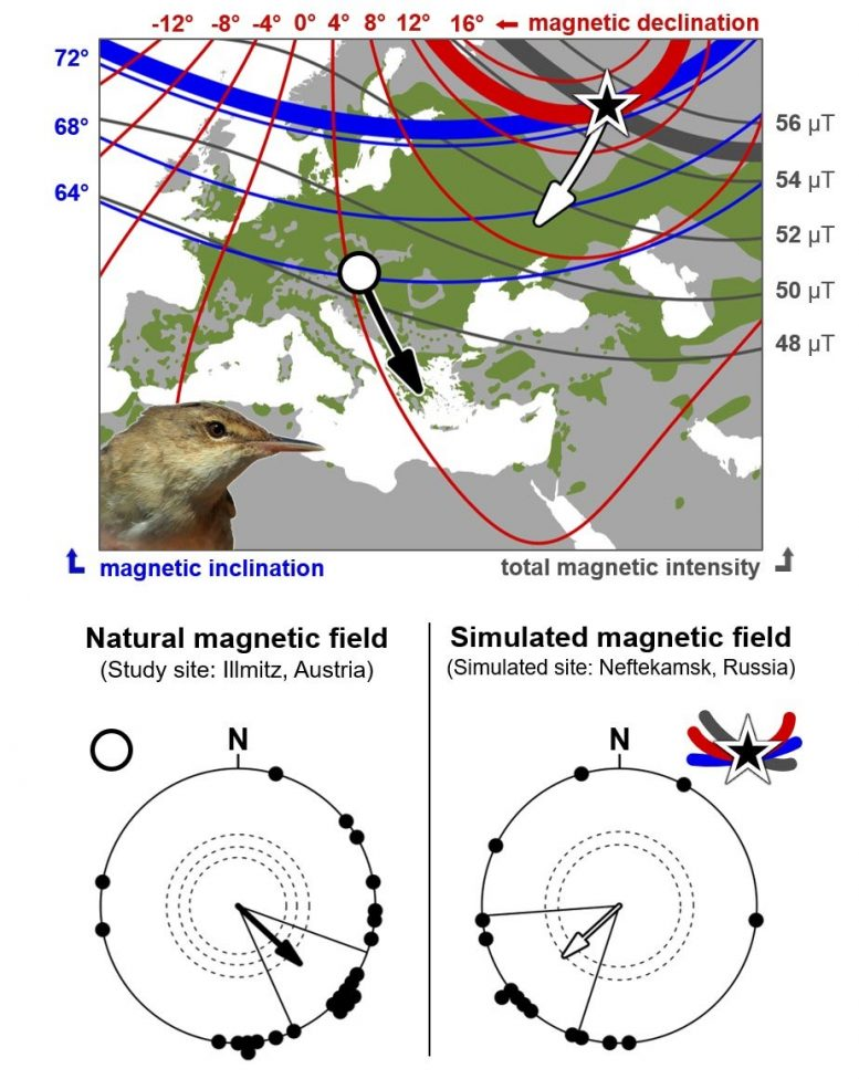Eurasian Reed Warbler Breeding Range and Variation in Geomagnetic Signature
