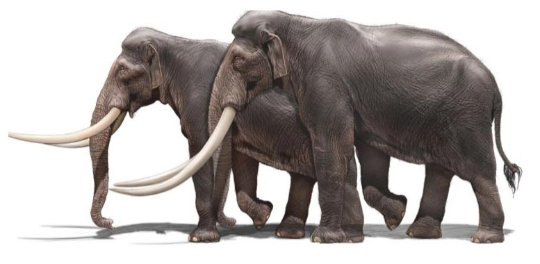 European Straight Tusked Elephant