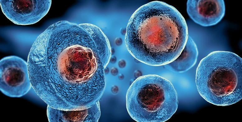 Evolutionary Mystery of Cell Nuclei