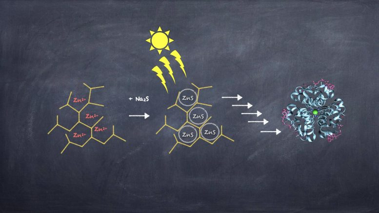 Evolutionary Steps Leading Towards Modern Enzymes