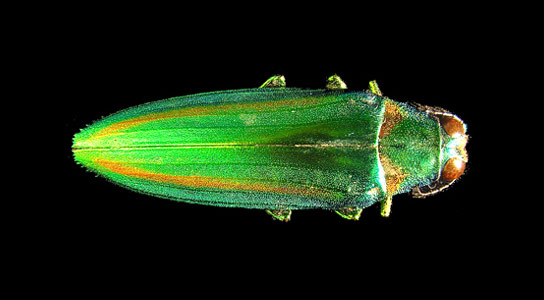 Explaining the Preservation of Colors in Fossil Insects
