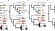 Explosive Diversification of Marine Fishes at the Cretaceous–Palaeogene Boundary