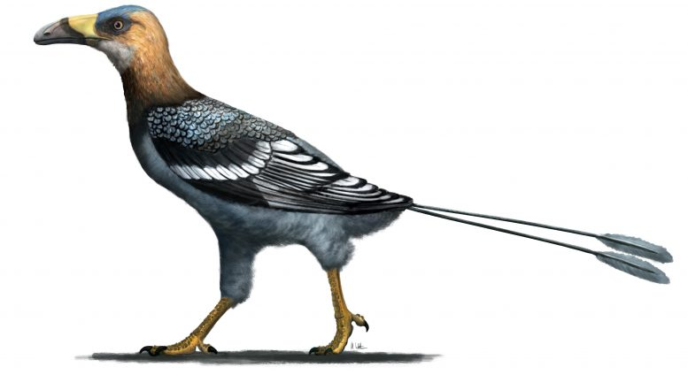 Falkatakely Reconstruction