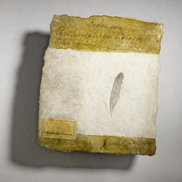 Feather Fossil