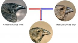 Finch Beak Morphology