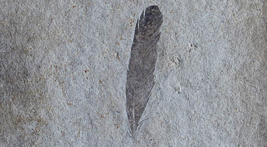 First Complete Chemical Analysis of Dinobird Feathers