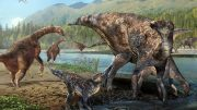 First North American Co occurrence of Hadrosaur and Therizinosaur