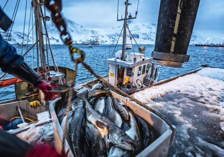 Fishing Boat Arctic Sea