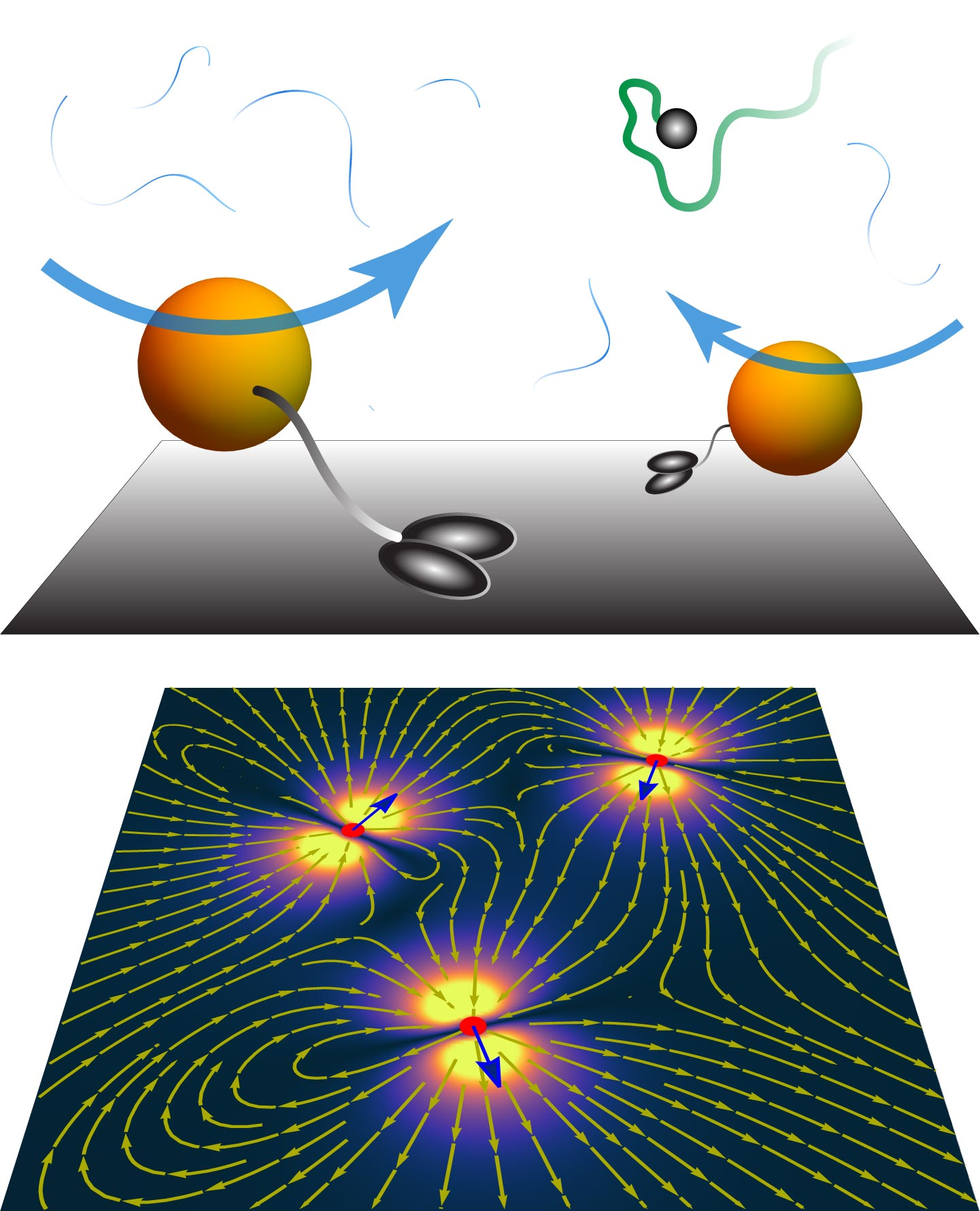 """Diffusion in Living Organisms: How Cells Transport Molecules With """"Active Carpets"""""""