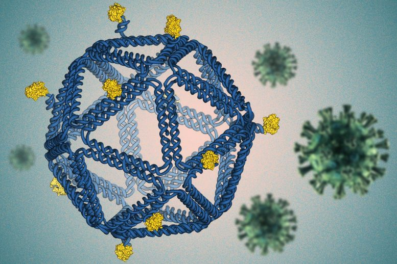 Folding DNA Virus Structure