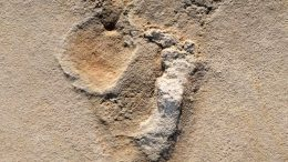 Footprints of Predecessors of Early Humans