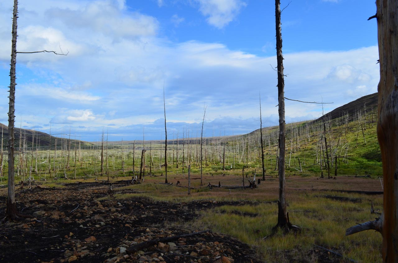 Devastating Forest Decline: Tree Rings Show Scale of Arctic Pollution Is Far Worse Than Previously Thought - SciTechDaily