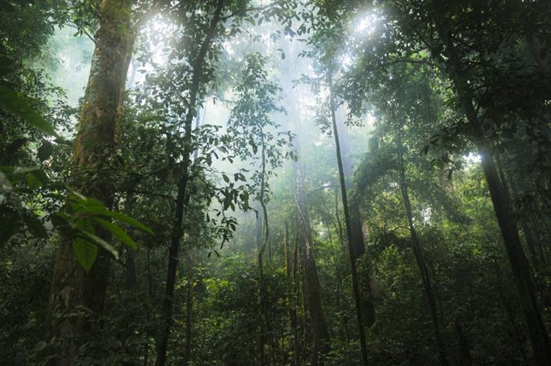 """""""Terrifying"""" Climate Impacts 626% Worse Than Expected for Intact Forest Loss"""