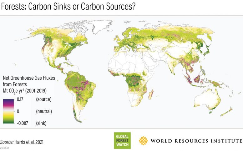 Forest World Map Carbon