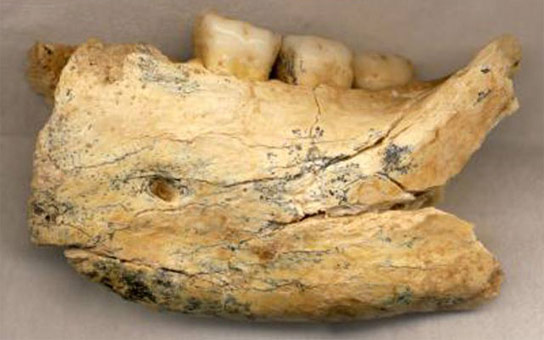 Fossil-From-the-Balkans-Sheds-New-Light-on-Human-Evolution