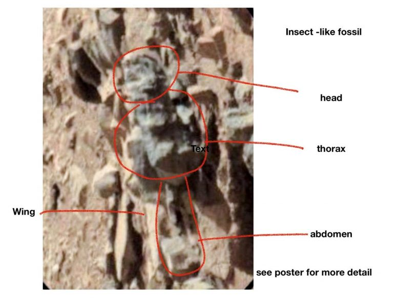Fossil image by Mars Rover