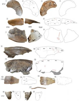 Fossil Samples of New Turtle Species