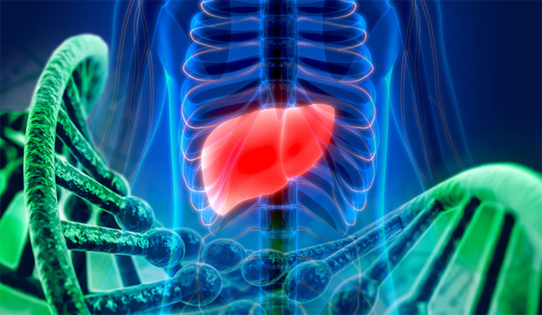 Four Genes Linked to Cystic Diseases of the Liver and Kidney